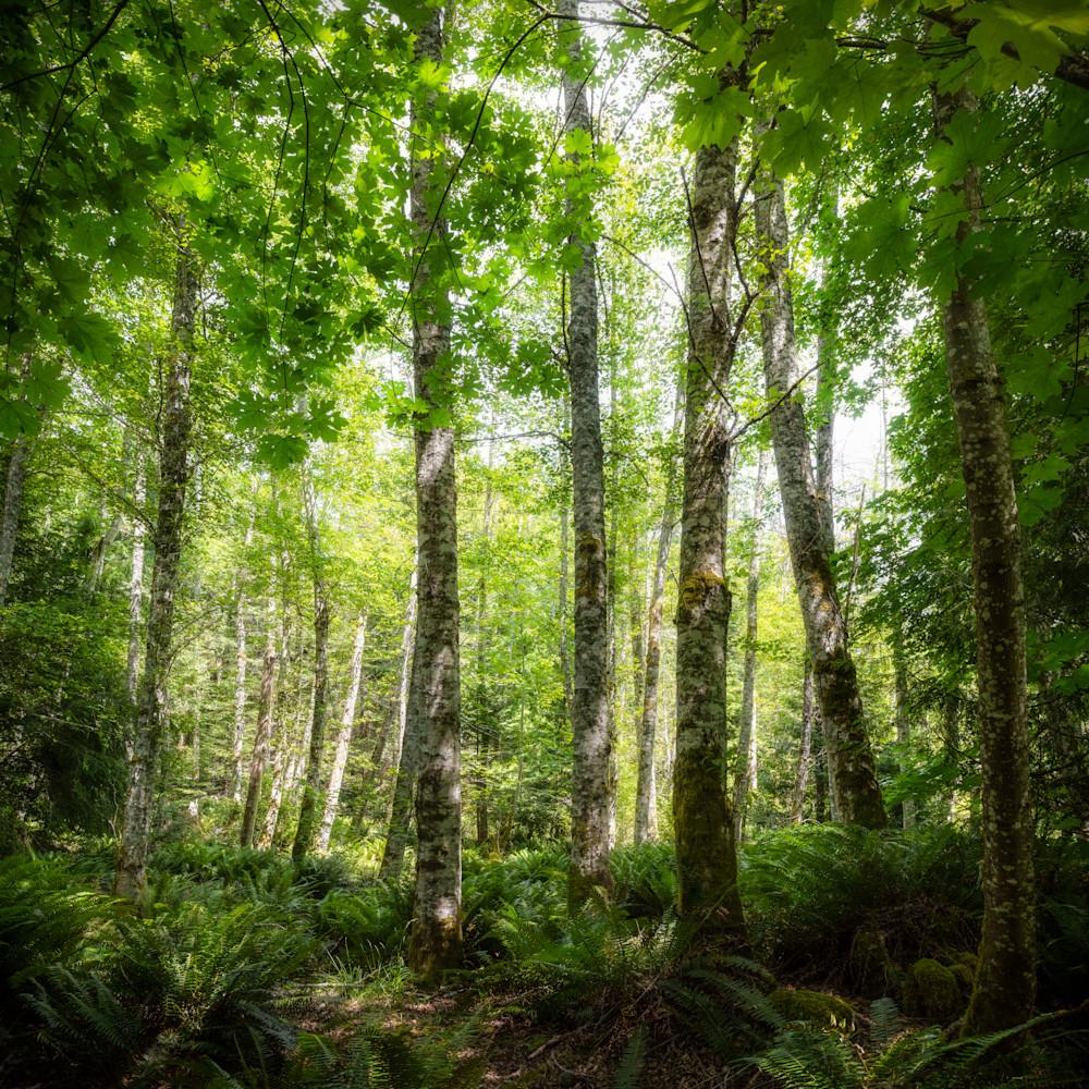 Galiano forest 1 ll3ihd