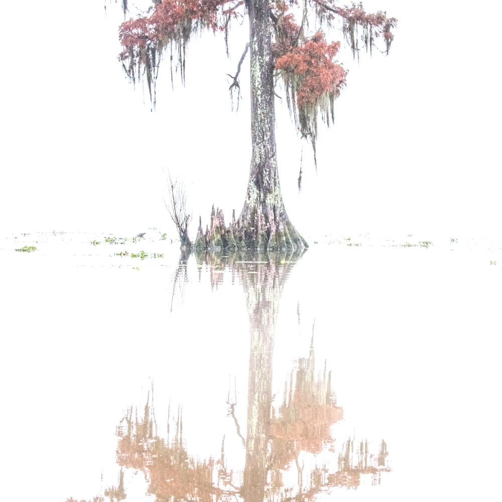 Andy crawford photography maurepas swamp 20171219 7 p8sexu