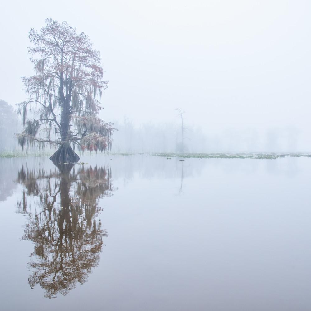 Andy crawford photography maurepas swamp 20171219 1 wrwdib