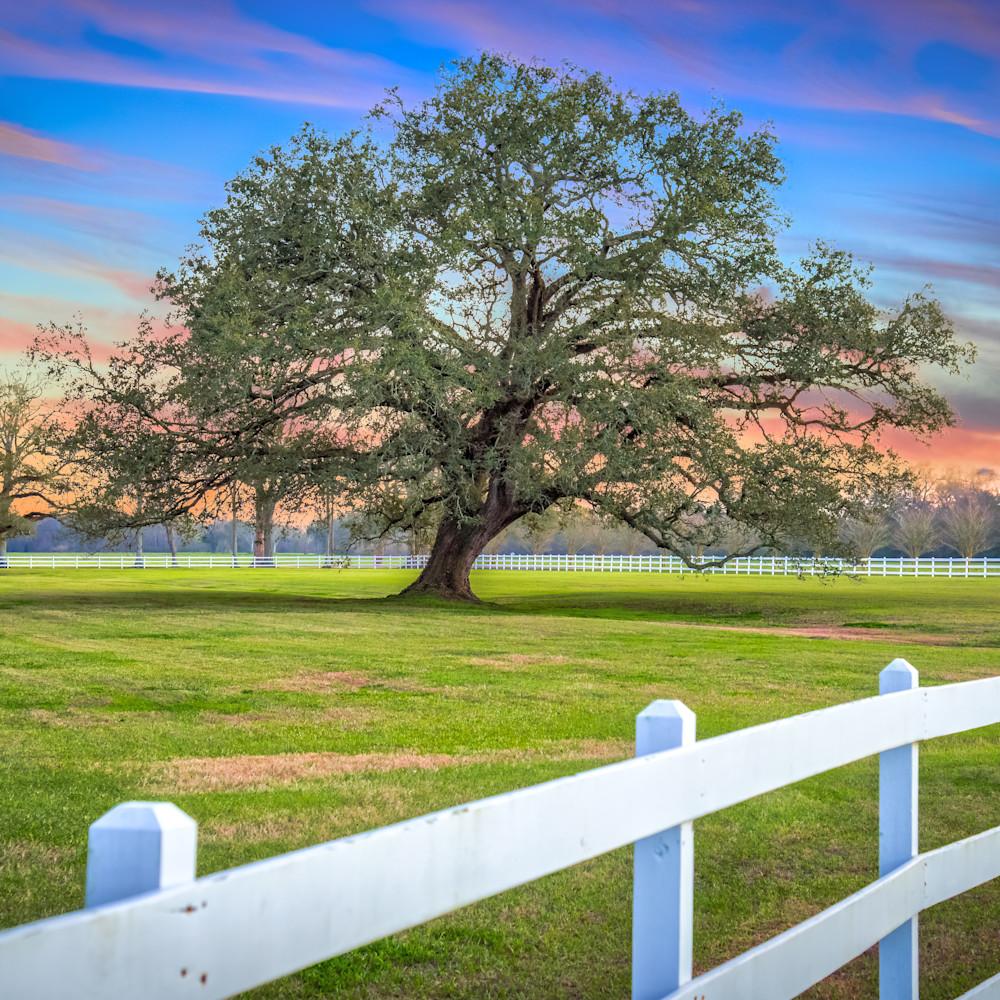 Andy crawford photography oak alley plantation 20180219 4 lwhwgd