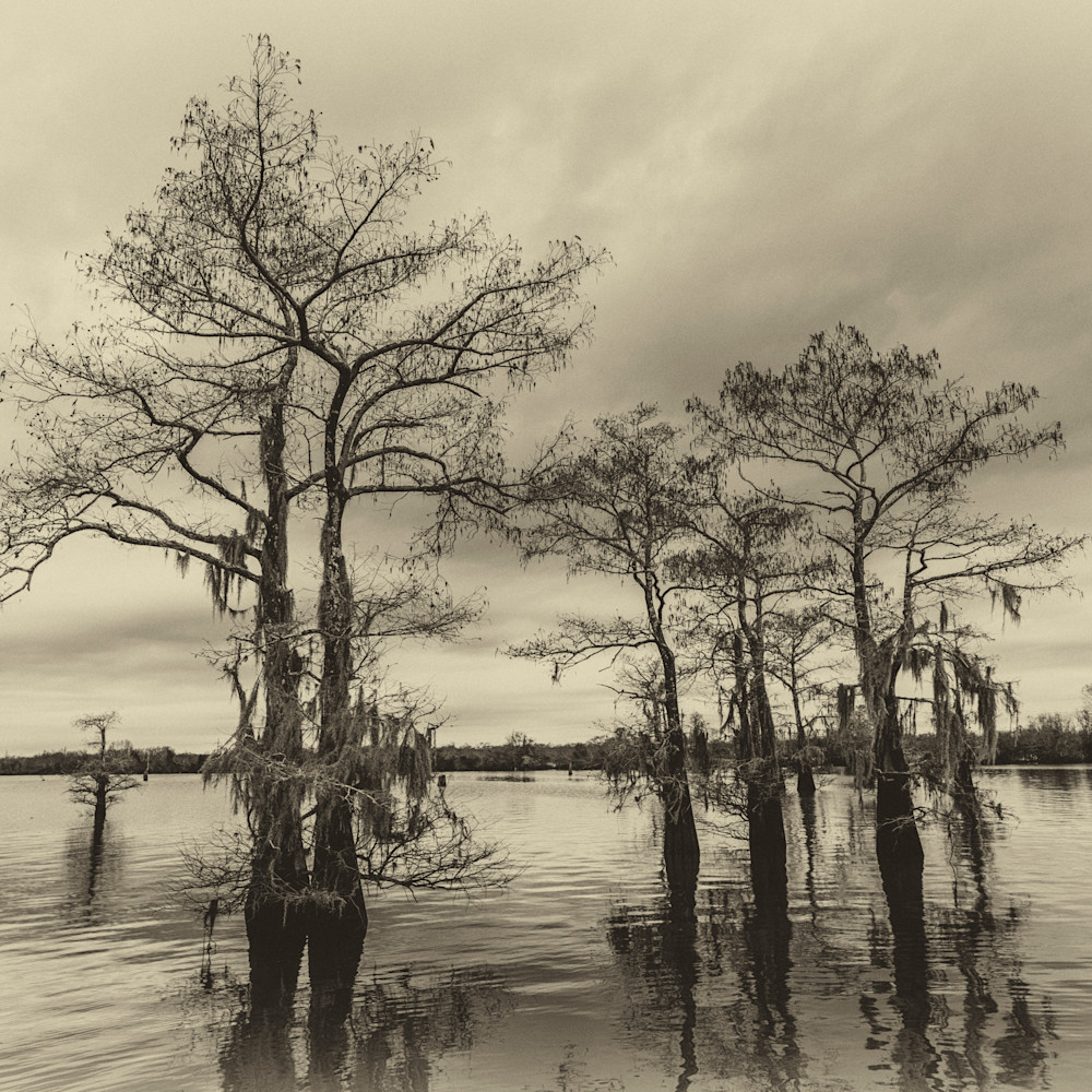Andy crawford photography henderson swamp 0117 3 ficnmh