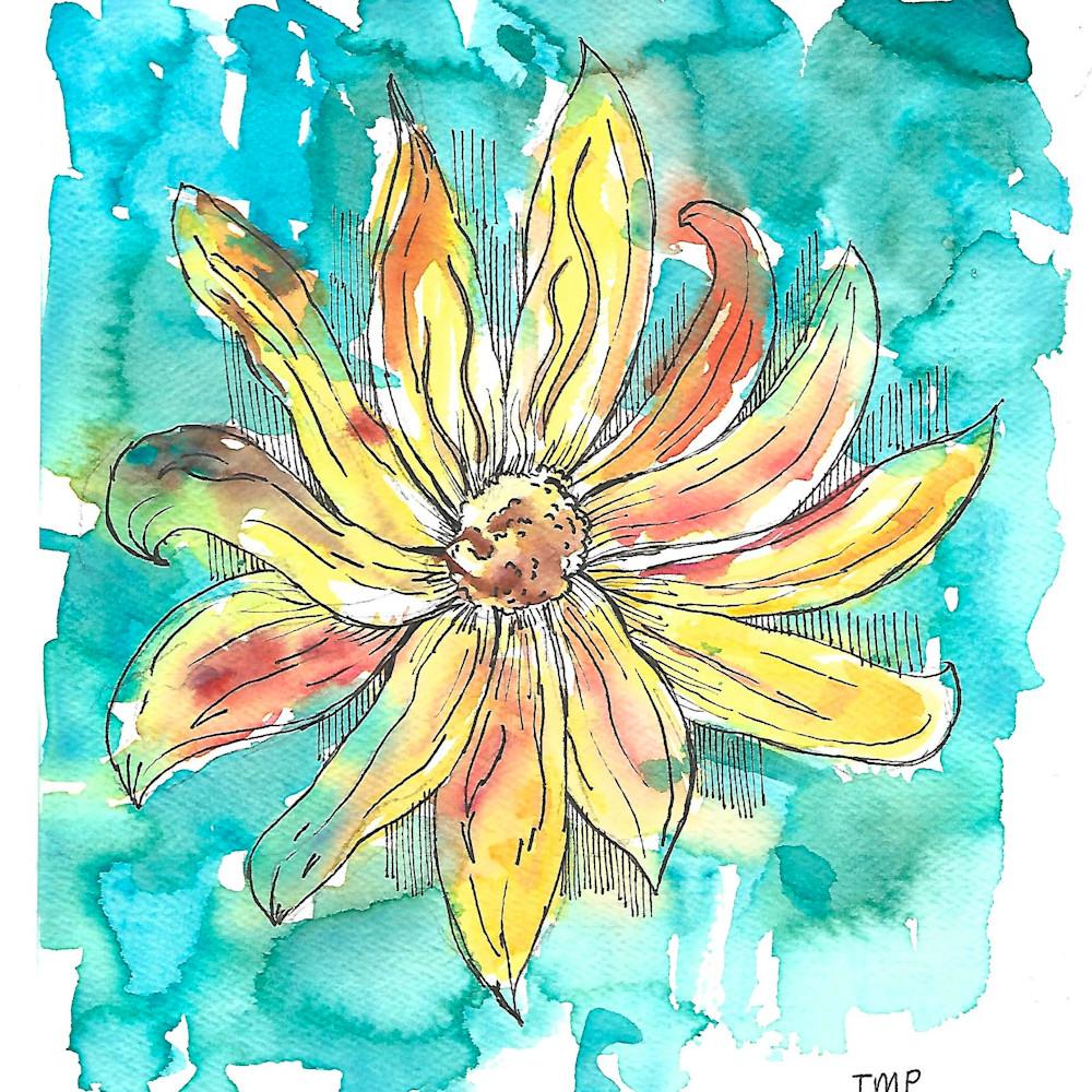 Sunflower pxjn3q