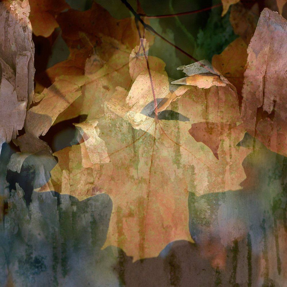 Abstract leaf ie9yde