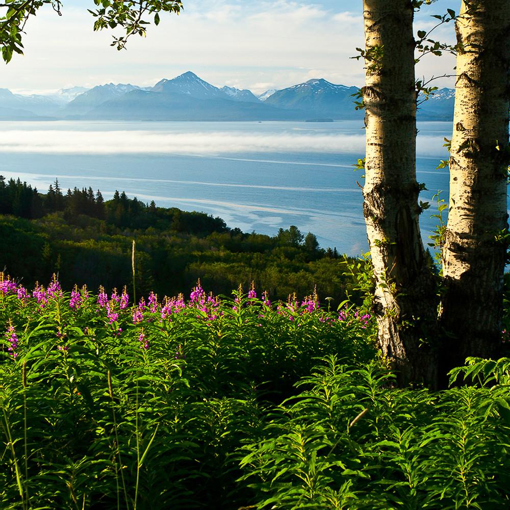 Alaska   homer mg2325 fwfyad