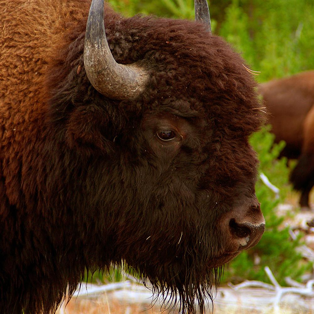 Buffalo img2565  ph6xze