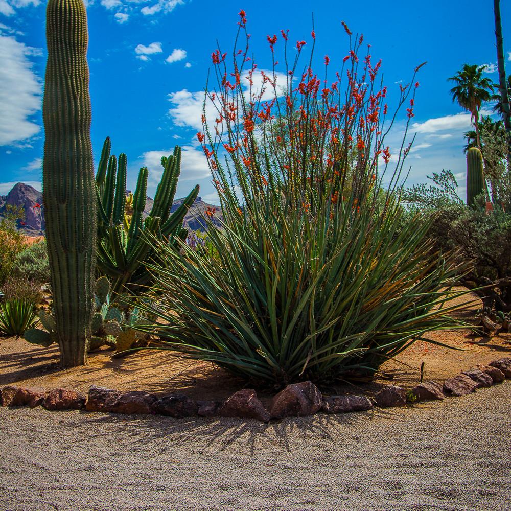 Cactus   octillo garden mg 0835 gj7bbl