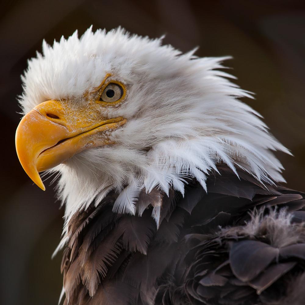 Eagle mg7959 hvzu29