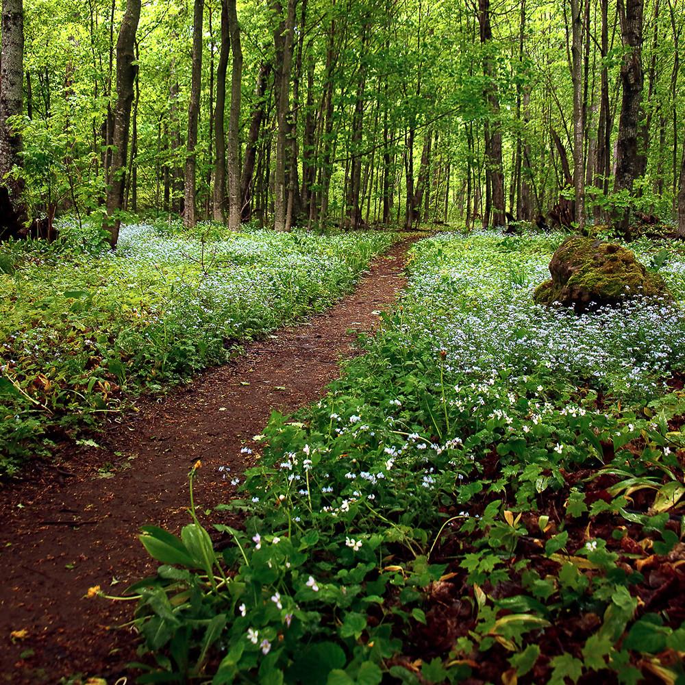Forest floor js8541 nt3bt0