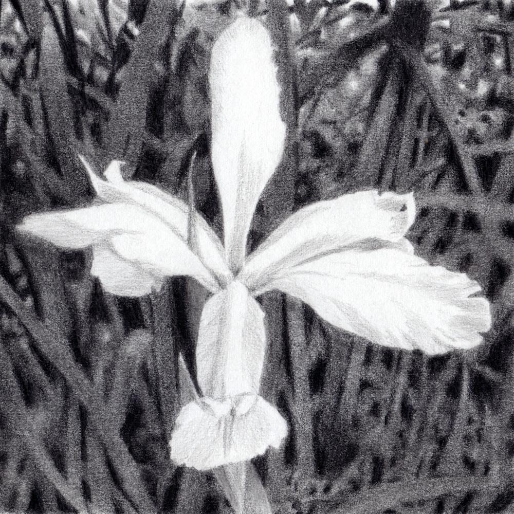 Iris clean wgkzru