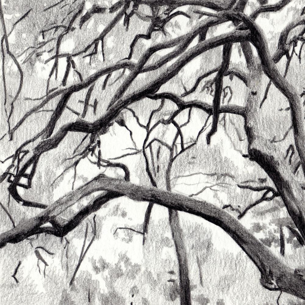 Live oak clean fsrqdq