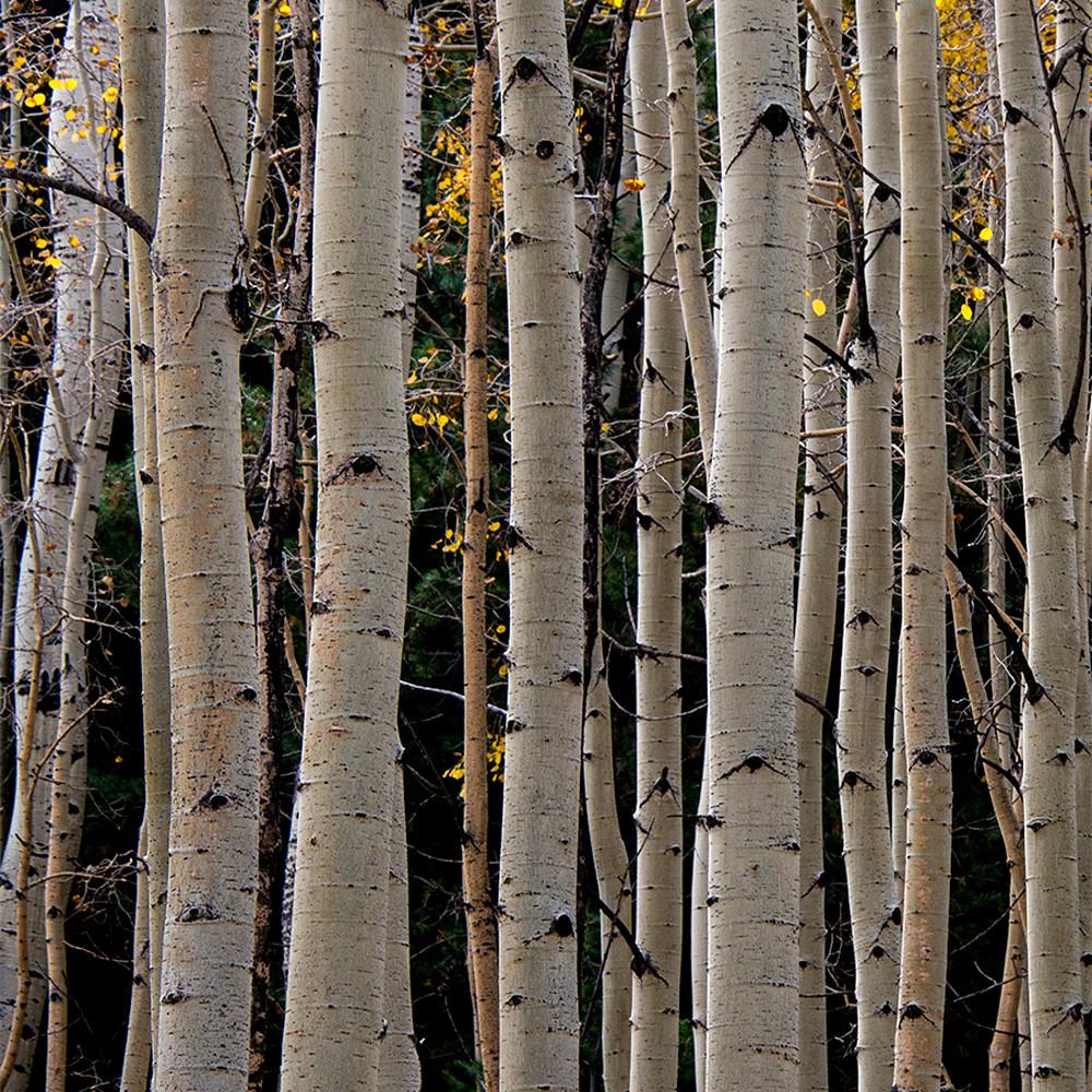 Aspen vertical lines uipu2h
