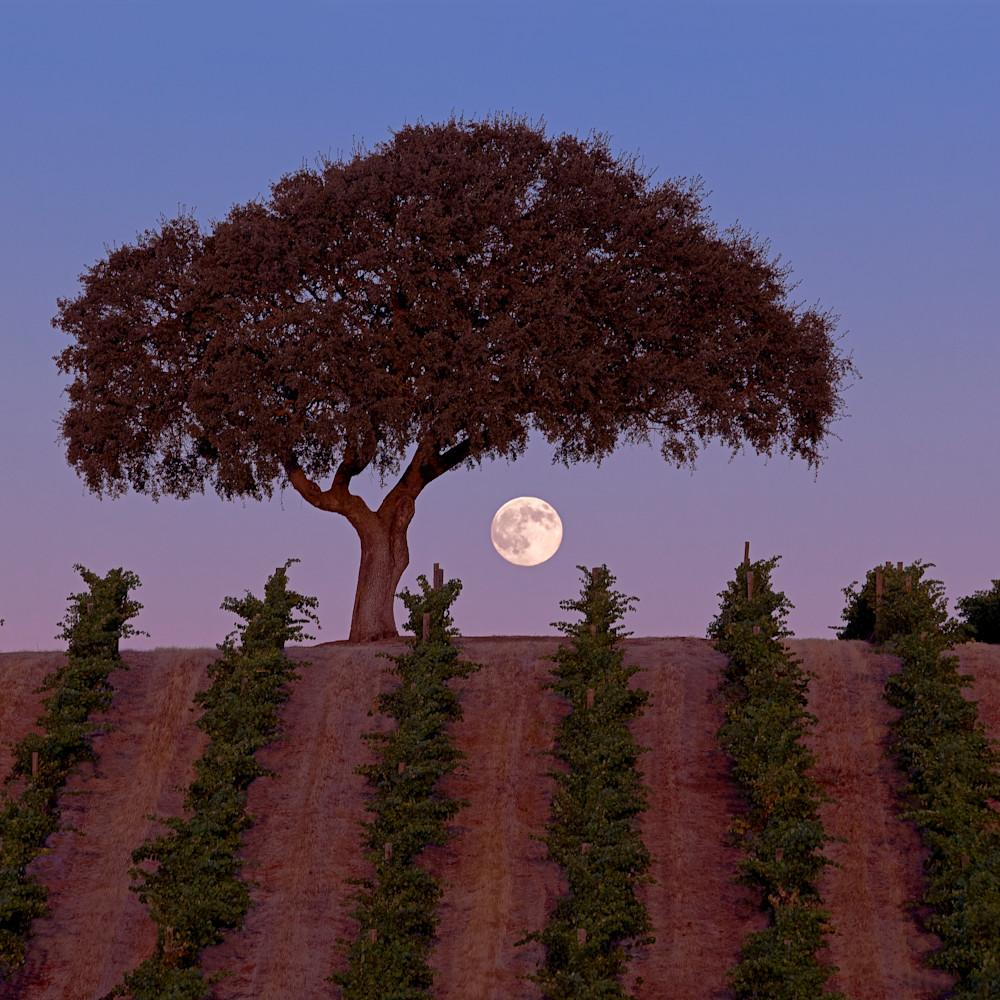 Harvest moon iru93p