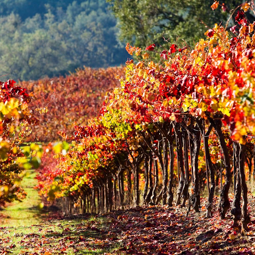 Harvest vineyard crdy2h