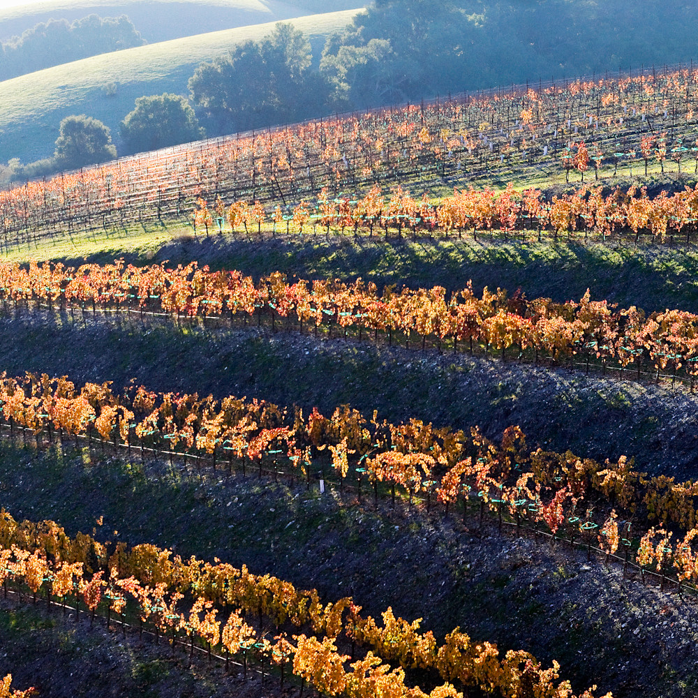 Fall vineyard ntkt4t