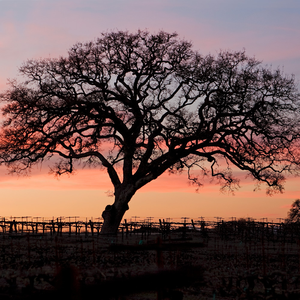 Winter oak n7kkz9