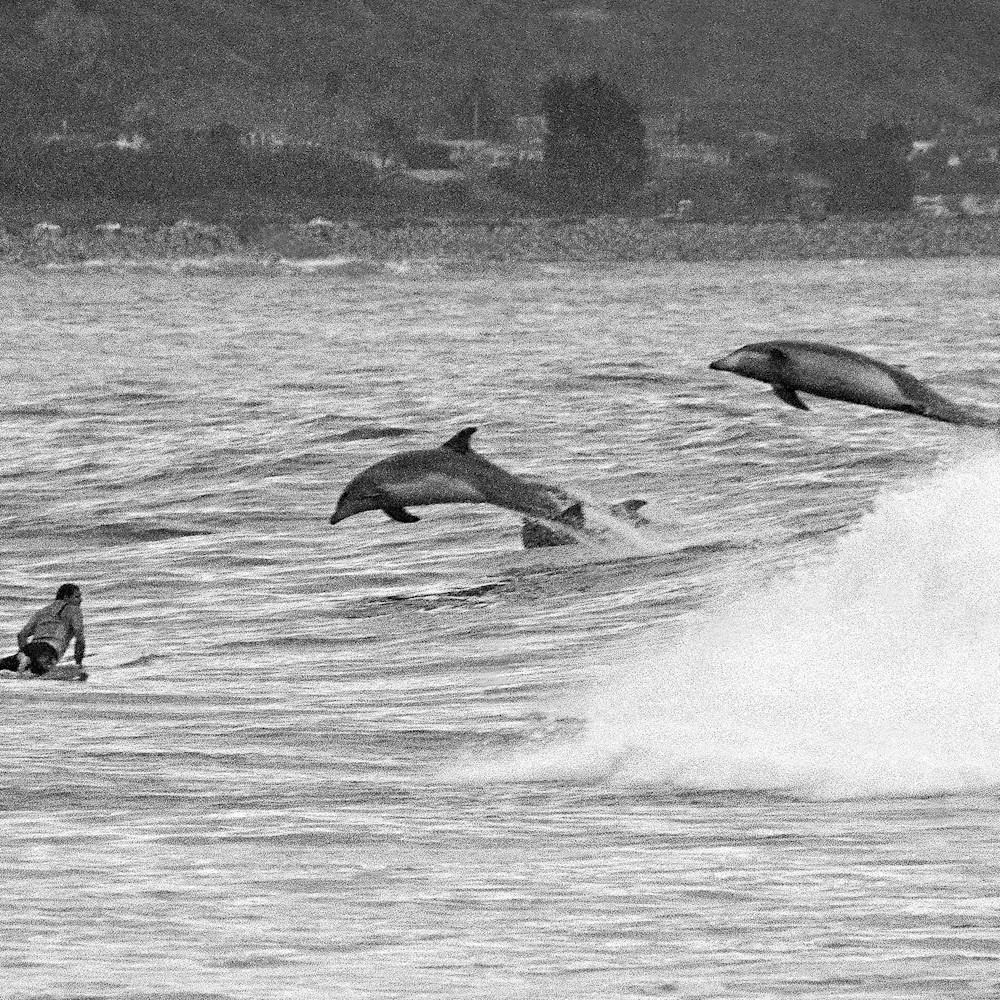 Rincon dolphins uwyjwr