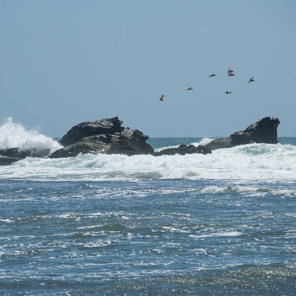 Pelicans dsc7227 fzvm6q