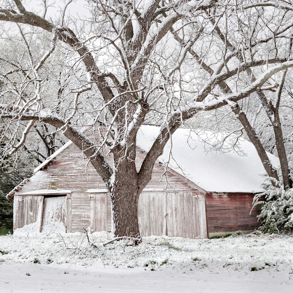 Q 001 spring snow   color 50x21 rlvvoh