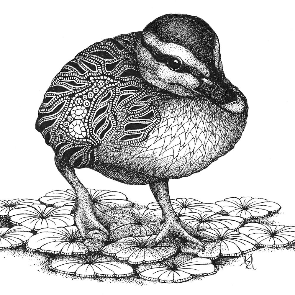 Duckling jv5ei9