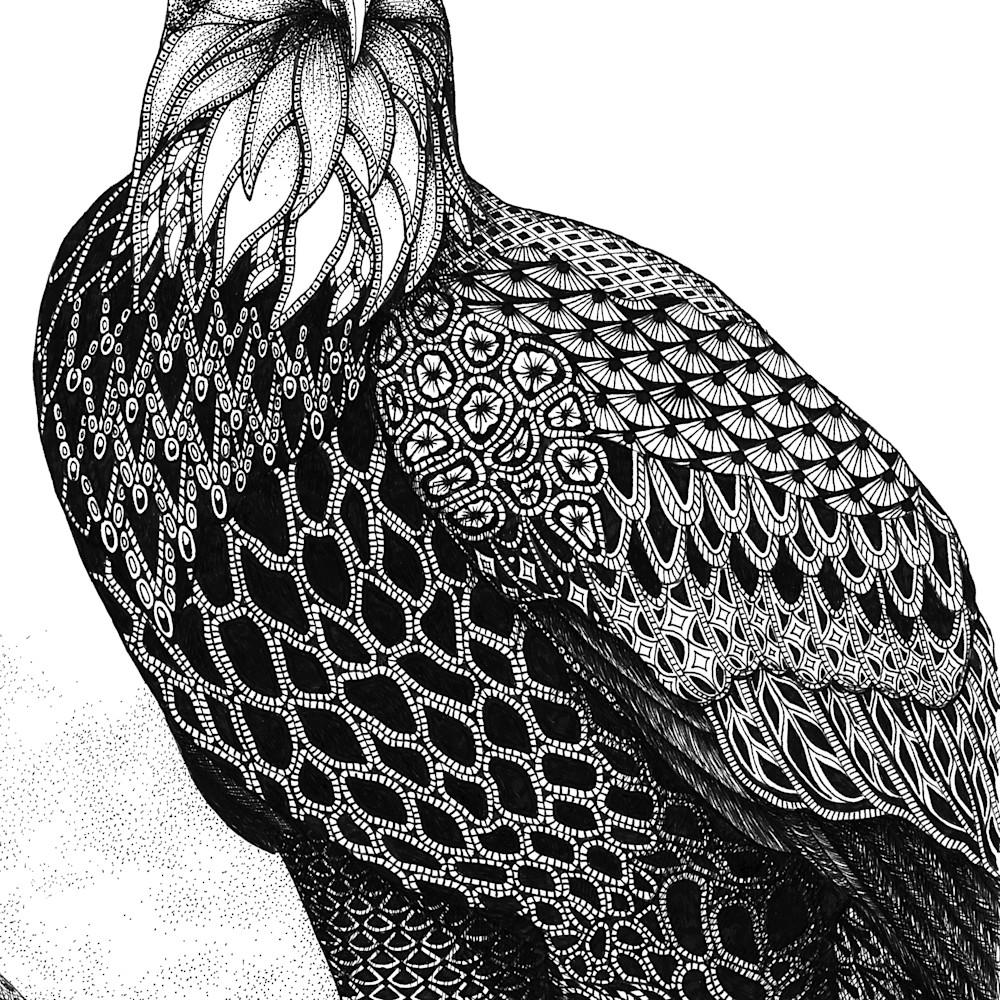 Eagle bald eagle gmukan