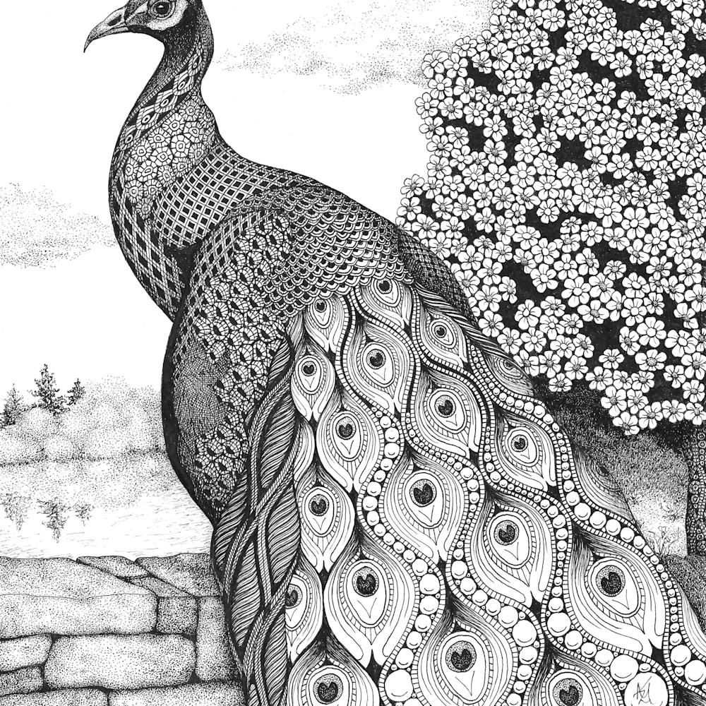 Posh peacock rbotav