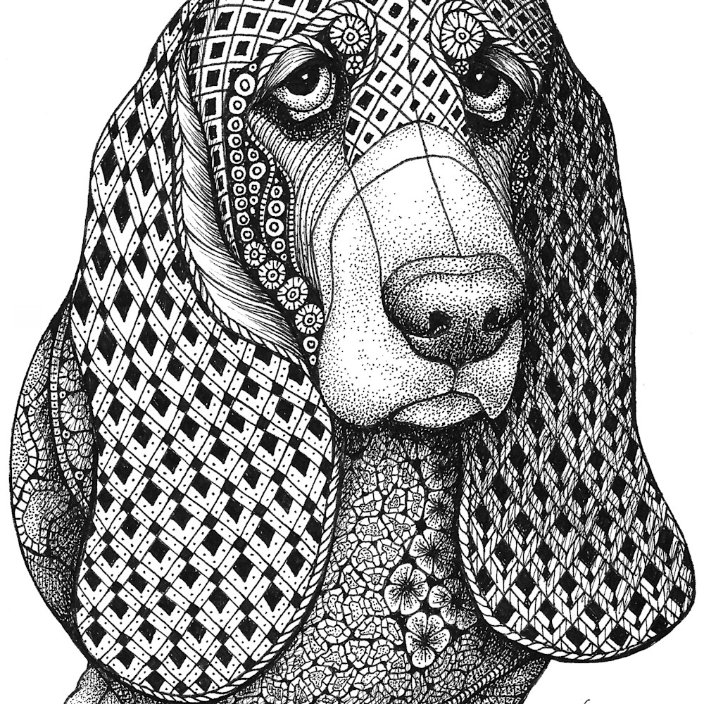 Bassett hound soojyc