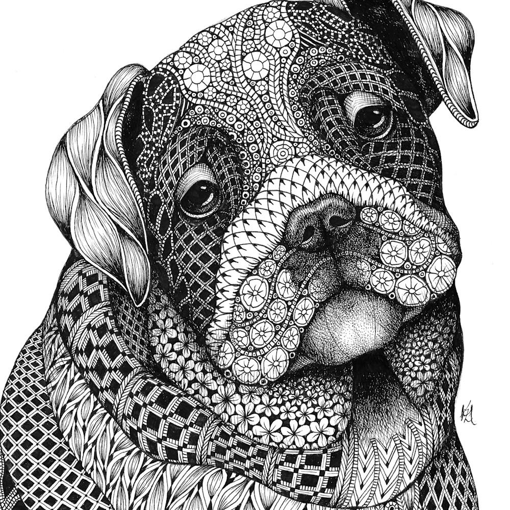 Bulldog pup a79ftx