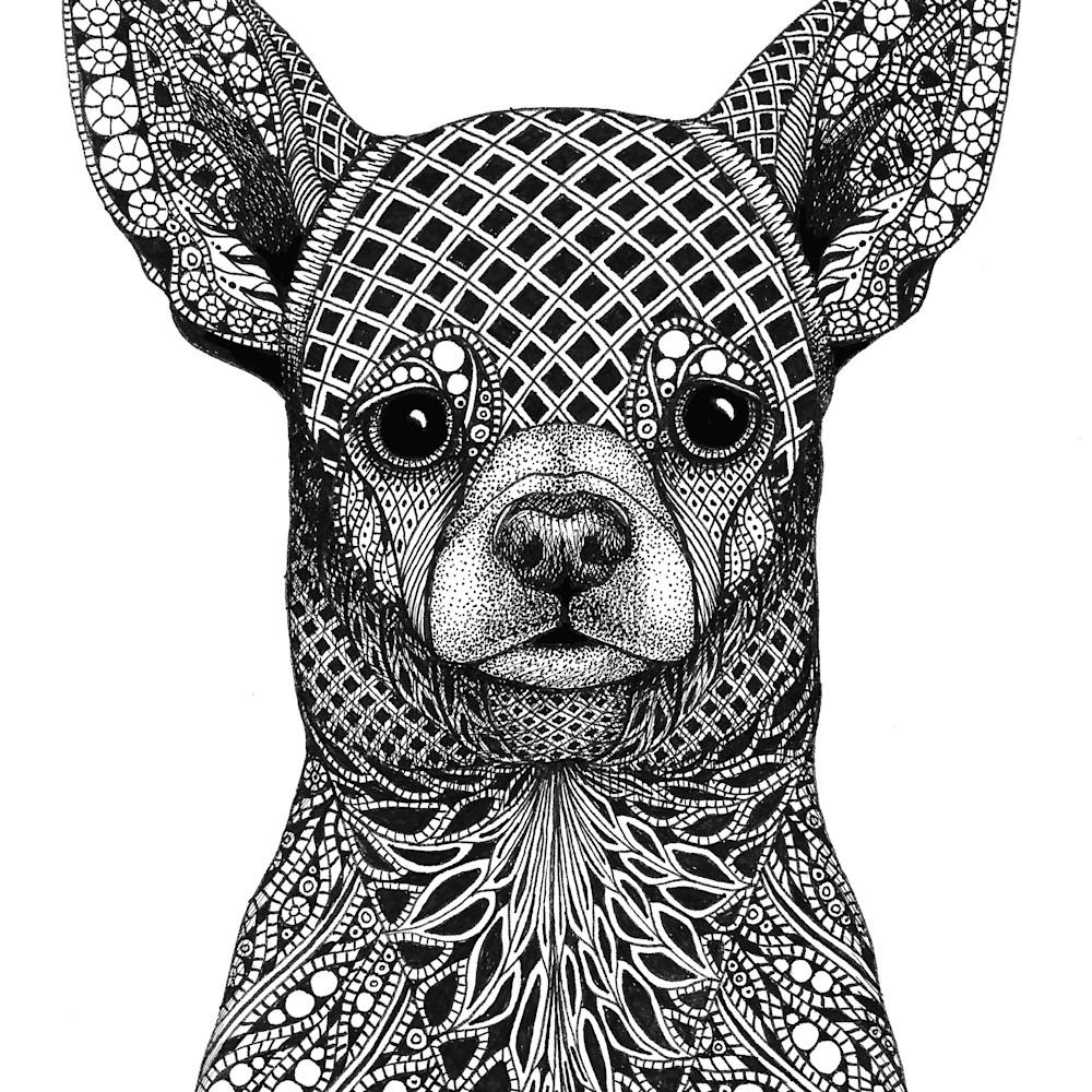 Chihuahua cmw2mr