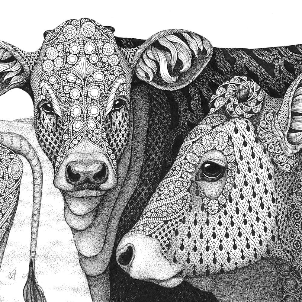 Cows the herd ms6unm