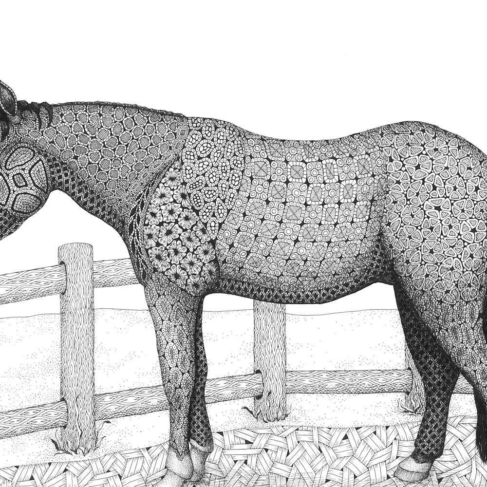 Horse  rocco xxhjjw