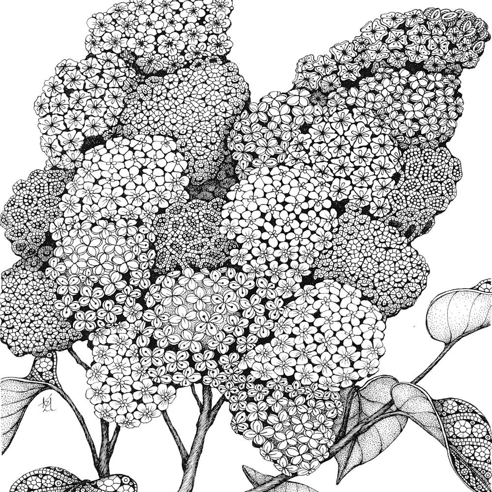Lilacs jv8ant