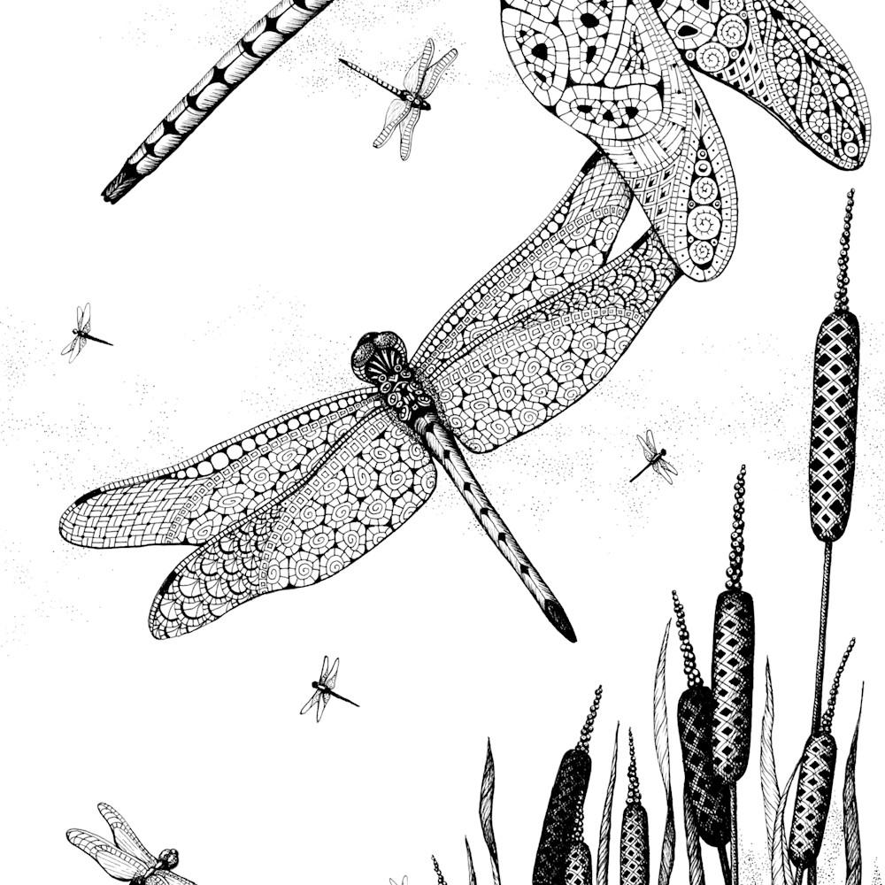 Dragonfly dance ktvqwa