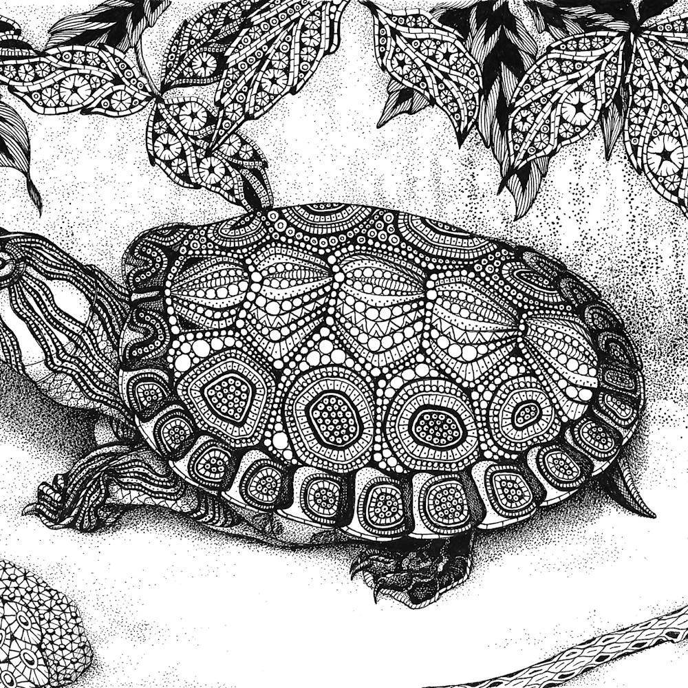 Turtle  wood turtle trhpk8