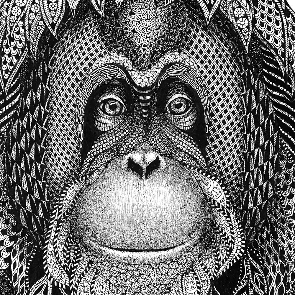 Orangutan  katie cropped yazjgr