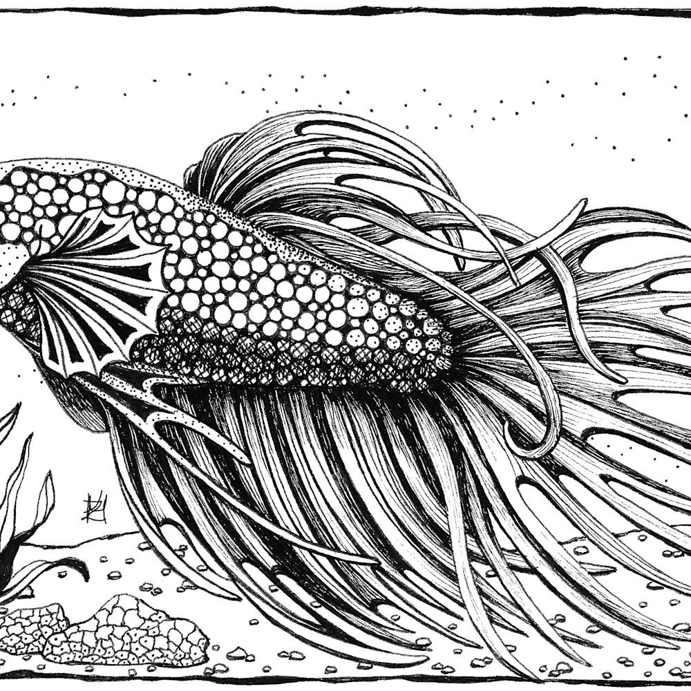 Betta fish slteee