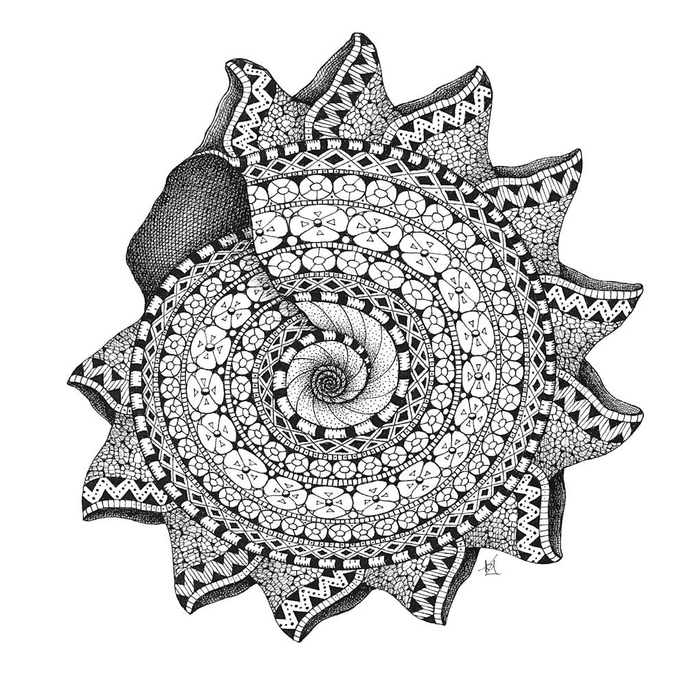 Spiral shell skgxfd