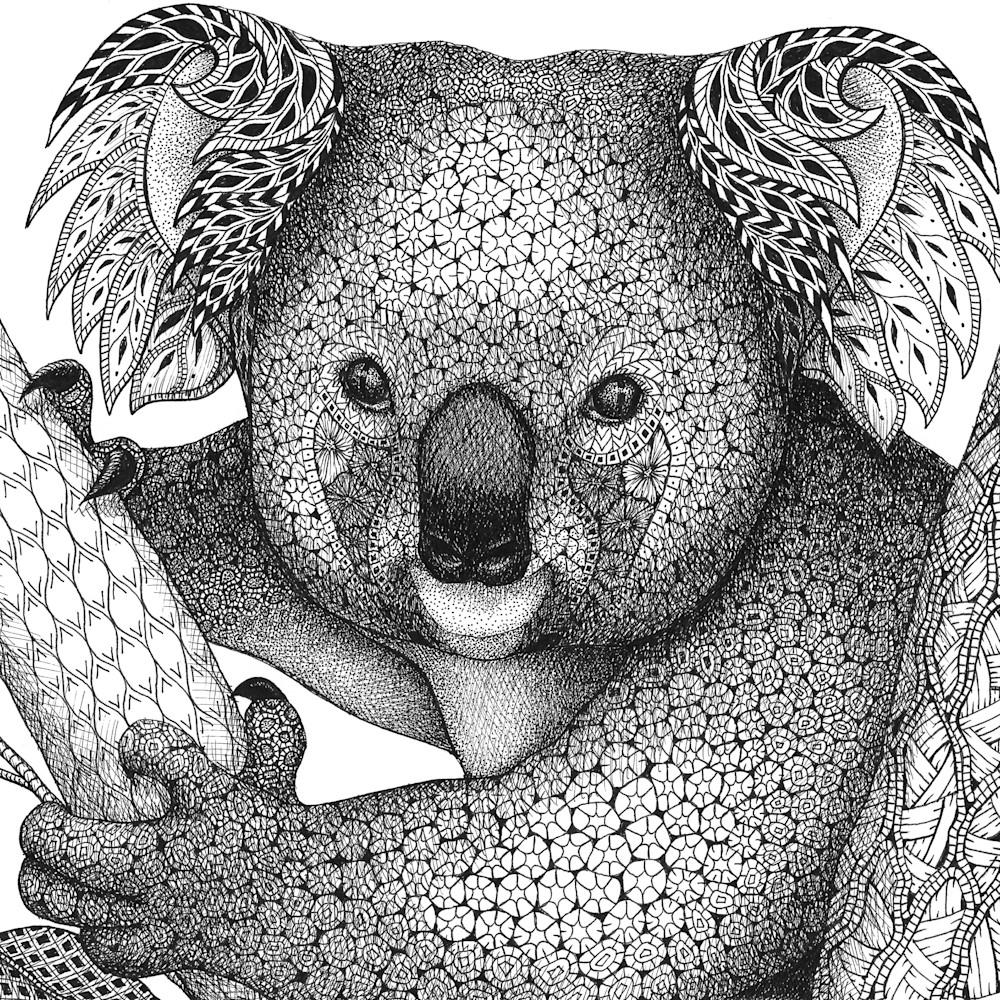 Koala pg4s07