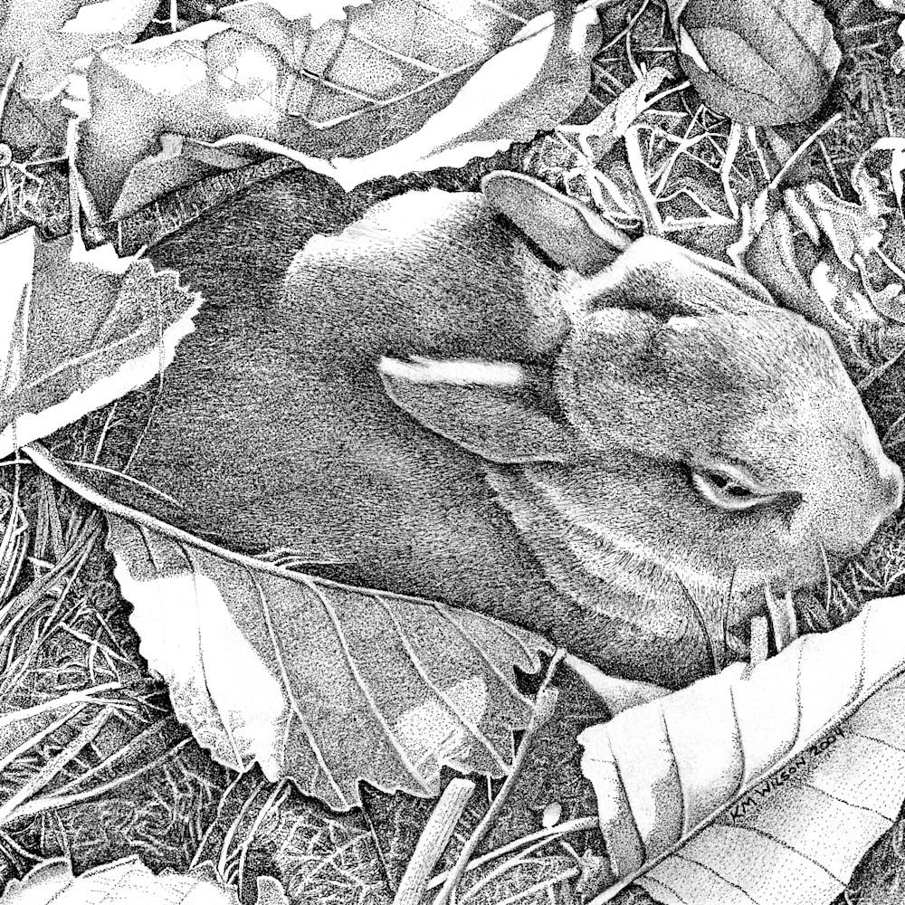 Bunny for carol tms7oj