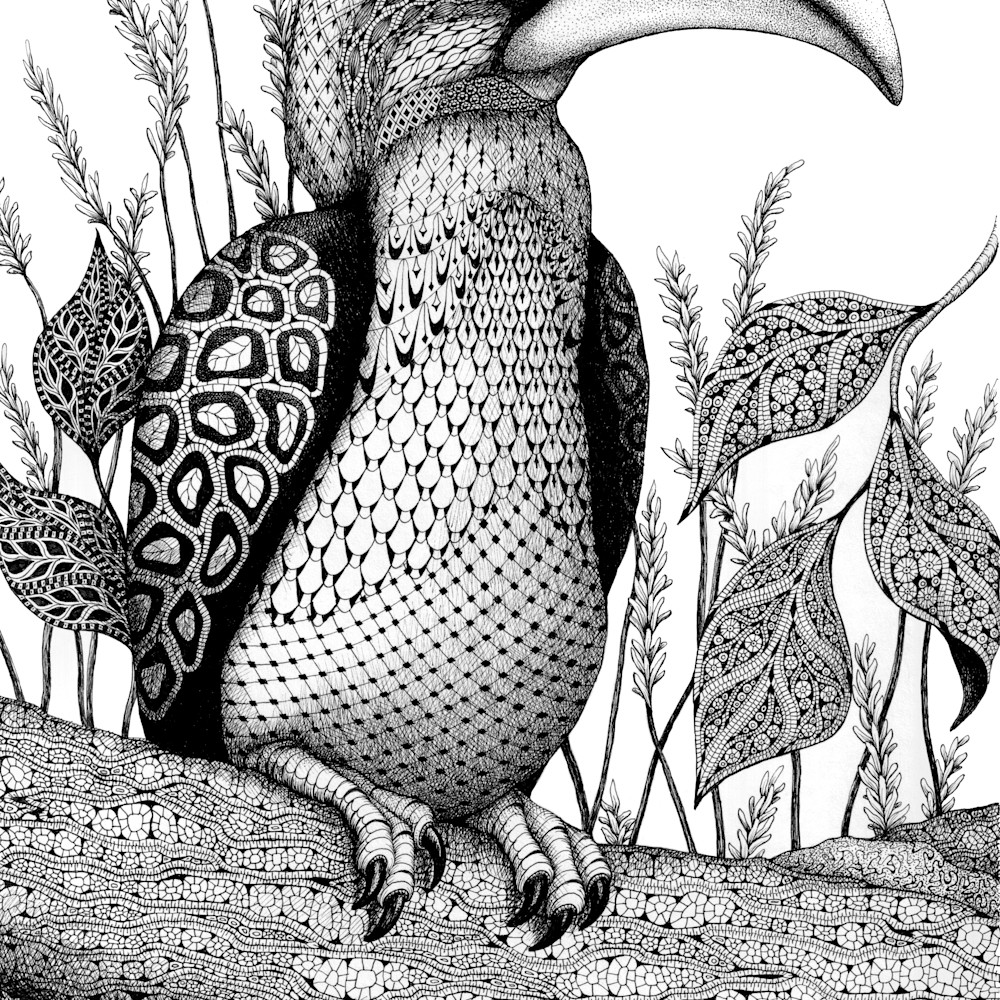 Hornbill piyaca