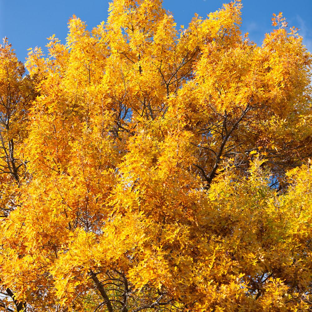 Autumn oak moon 39748 ewulg3