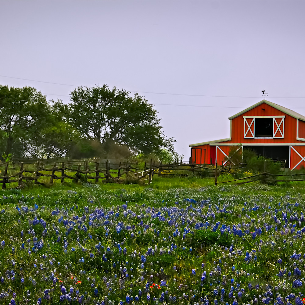 Bluebonnets and barn 2 colorful owki09