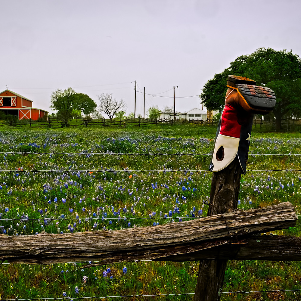 Bluebonnets and boot 1 colorful sq2izb