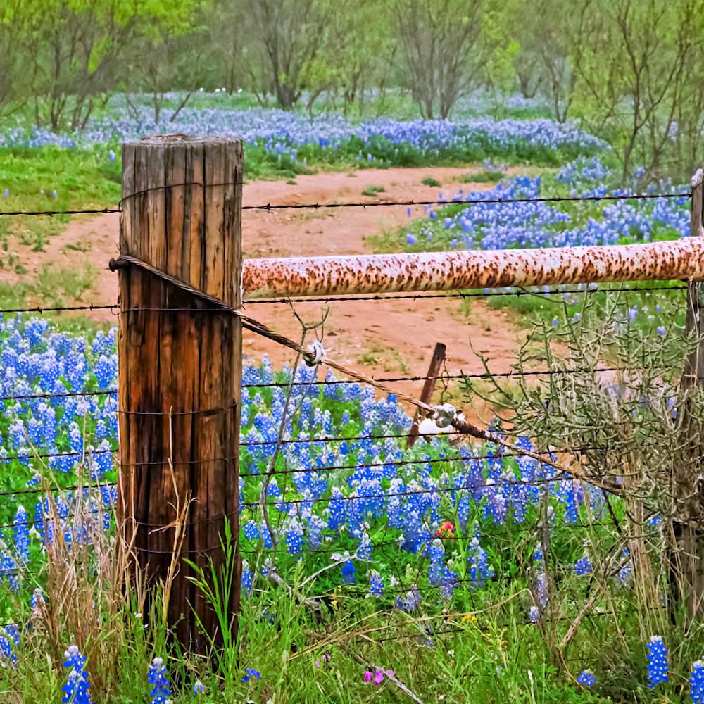 Bluebonnets and fence 5 colorful ihvjyj