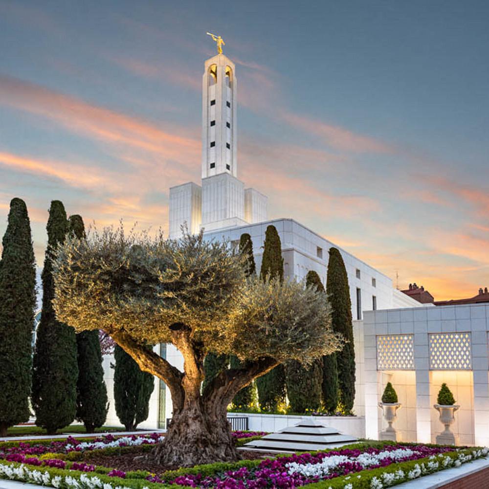 Madrid spain temple   olive tree robert a boyd web kxfuwg