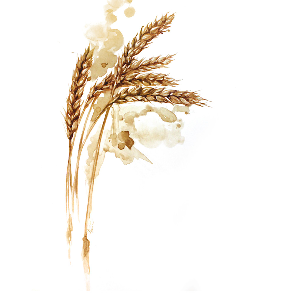 Harvest brew ii dagpq5