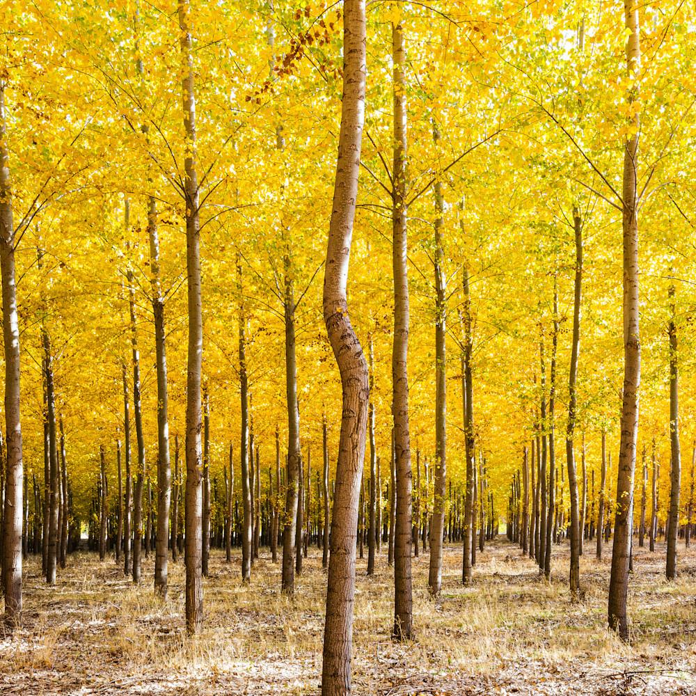 Bordman trees  aeawtm