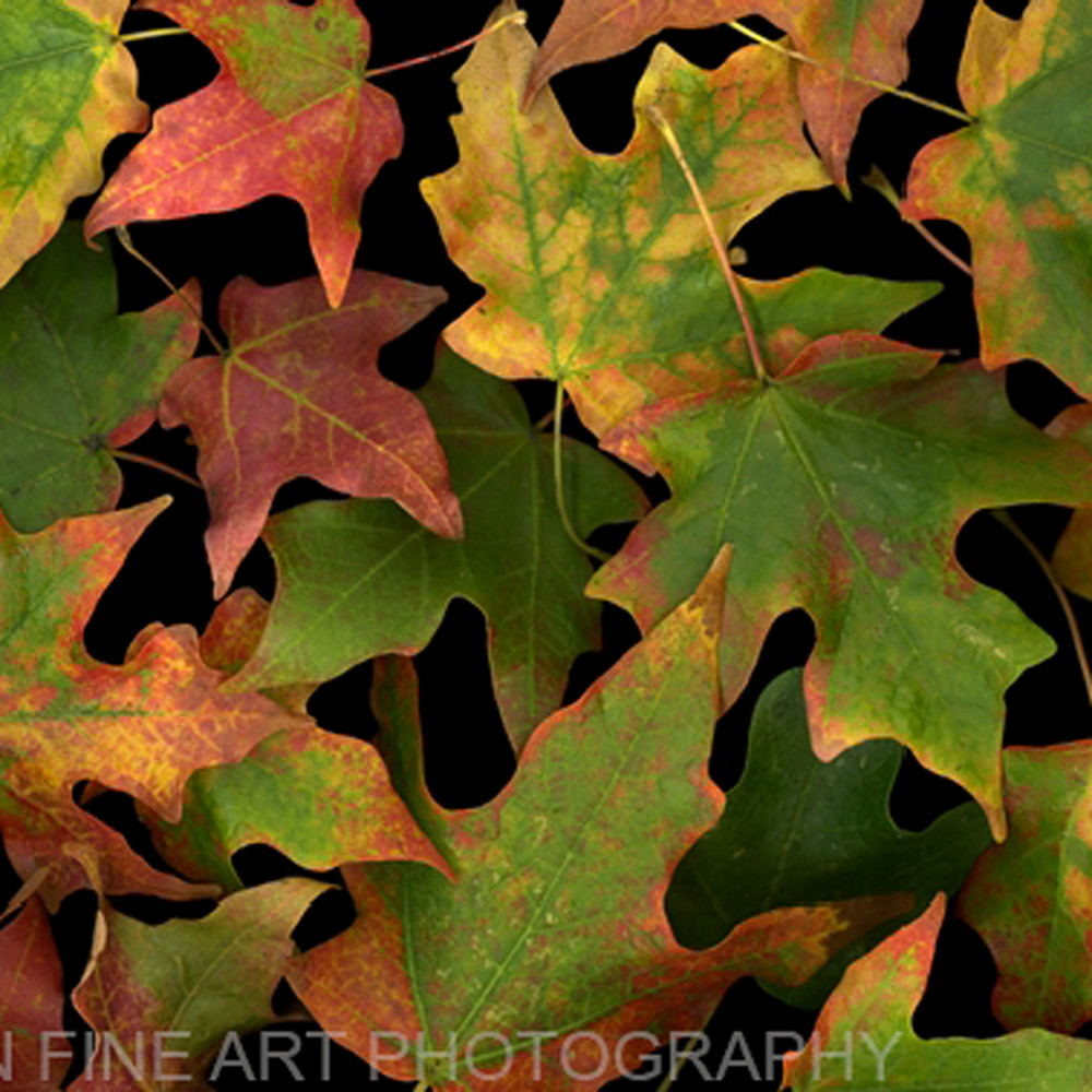Leaves scattering koral martin ueccyb