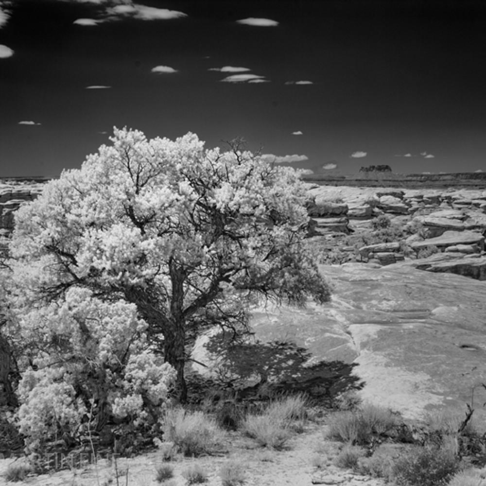 Infrared canyonlands tree 5685 koral martin bpuoag