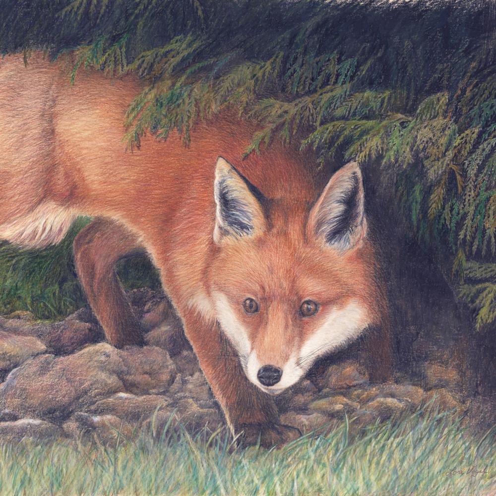 Fox on rocks together 2a r2frpf