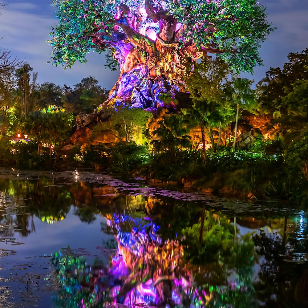 Tree of life reflections2 tjqbau